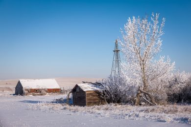 Hoarfrost on the Alberta prairies, winter of 2016