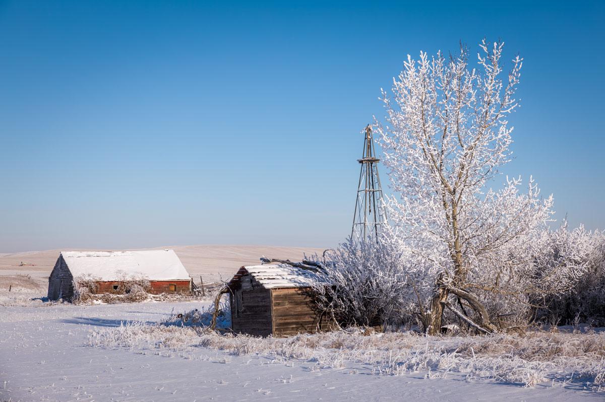 Hoarfrost on the Alberta prairies, winter of 2016